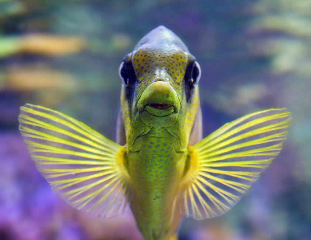 Agua de ósmosis y acuario