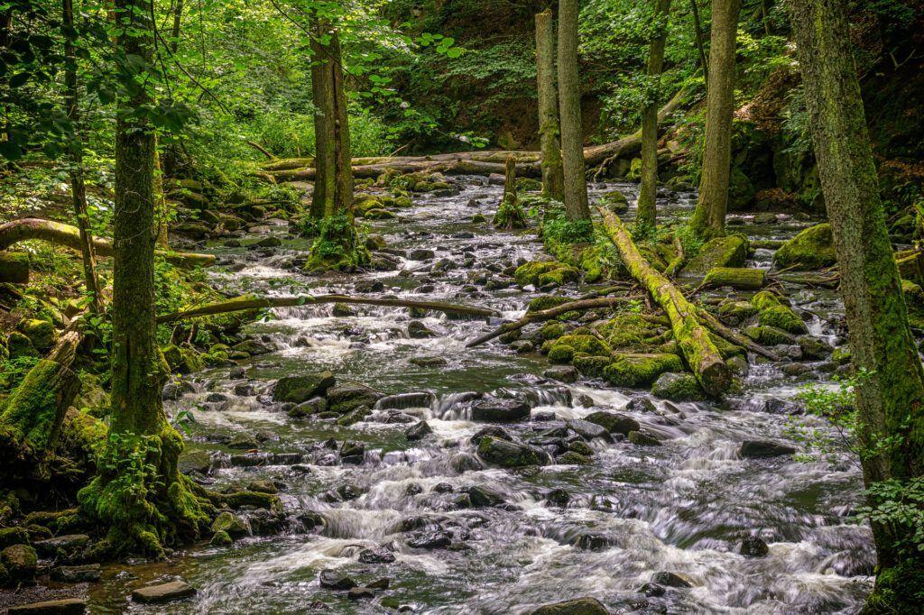 Un río por el que va surcando agua de calidad y en el que dará lugar la ósmosis. Si quieres saber más sobre que es la ósmosis y la ósmosis inversa, entra y encuentra una explicación diferente a lo que estás acostumbrado o acostumbrada.